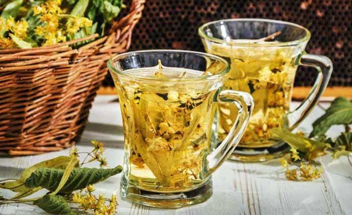 Chá de carqueja ajuda a emagrecer