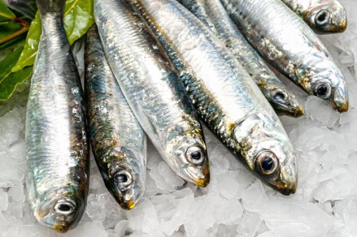 Os 9 benefícios da sardinha para saúde